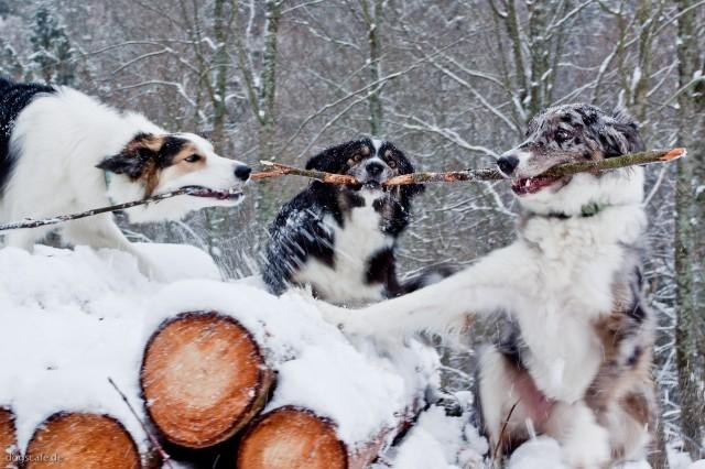3hunde